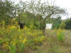 Wilde Bienchen Wiese Wild Bee Garden