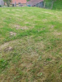 Vorher – Nichts, nur ein regelmäßig gemähtes Stück Rasenfläche