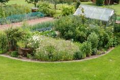 Zentrale Summ- und Brummecke in unserem Garten !