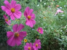 Eine Blüte schöner als die andere