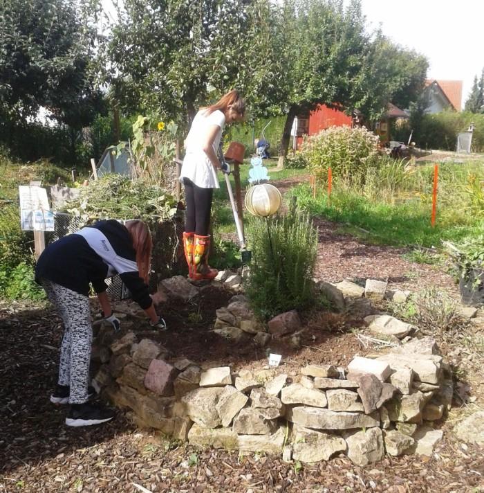 Teamarbeit der Garten AG der Selma-Rosenfeld-Realschule in Eppingen. Im Schulgarten wurde eine K ...