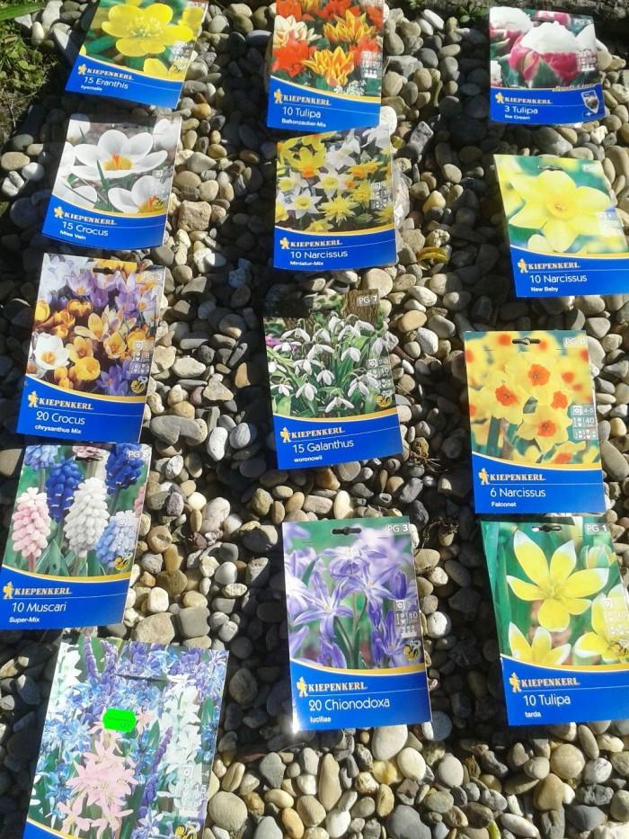 Blumenzwiebeln die auf den Schulgarten warten.