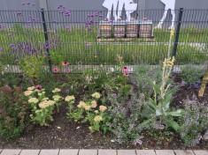 Unsere Bienen freuen sich über die üppige Bepflanzung im August.