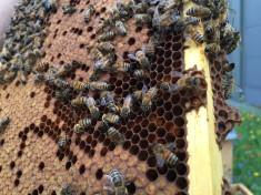 Unsere kleinen Bienen-Freunde sind im Juli schon ganz fleißig!