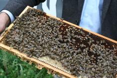 Das sind unsere fleißigen Bienen im September.