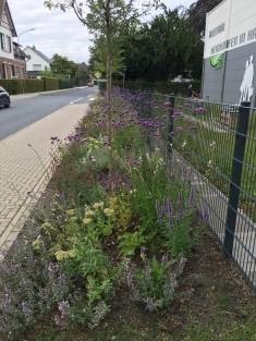 Sieht das toll aus: So blüht unser Garten im August!