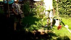 Im September haben wir noch einen Bienenbaum gepflanzt. Er bietet reichlich Nektar in der Tracht ...