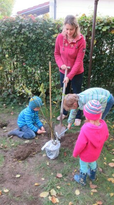 Hier pflanzen wir gerade eine Salweide (Palmkätzchen). Die Salweide bietet bereits Anfang März e ...