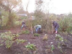 Anpflanzen bienenfreundlicher Stauden und Gehölze auf der Wiese.