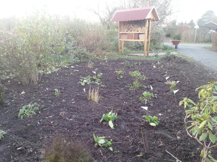"""Das bepflanzte Feld vor dem Insektenhotel. Die Pflanzen wurden gezielt nach dem """"Wir-tun-w ..."""