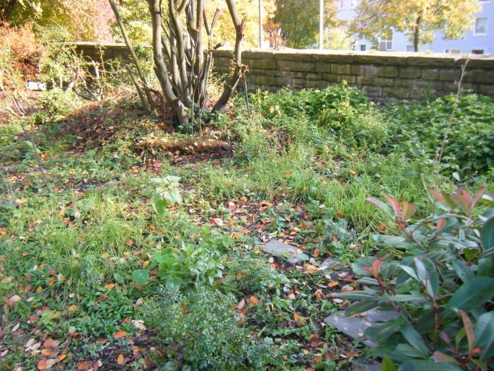 """Und auch dies ist ein """"vorher""""-Bild … wild, aber nur grün, keine Blütenpflanze ..."""