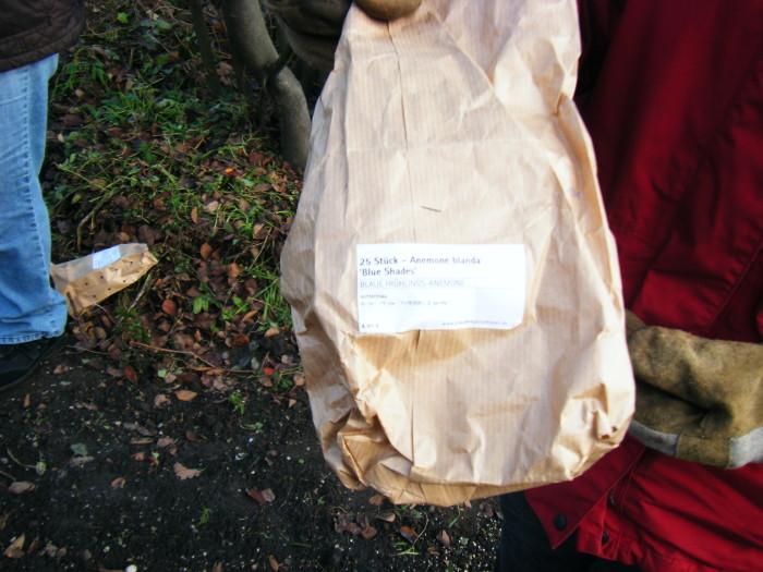 Und dann hätten wir da noch 25 Stk. der Anemone blanda.