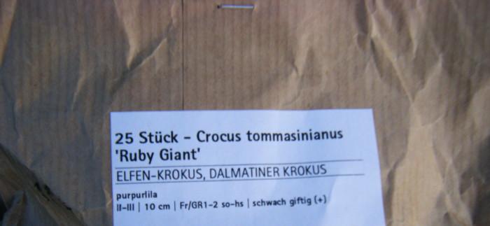 Und – last but not least – den guten alten Elfen Krokus. Wir hoffen, dass die Bienen ...