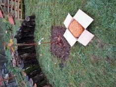 Kirschbäumchen bekommt Krokusteppich
