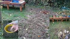 Bienenweideaussat rund um die neu gepflanzt Salweide, zwischen Bienentränketeich und Bienenstand ...
