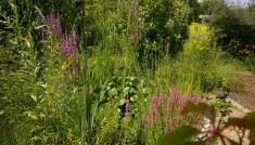 Auf violette Blüten fliegen nur Hummeln oder Falter