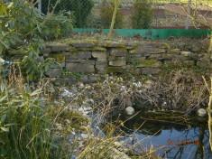 Die Trockenmauer – ein Unterschlupf für Hautflügler, aber auch für Molche und andere Amphibien