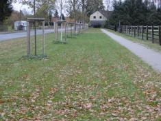 Grünfläche vor der Bepflanzung