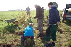 Heckenpflanzung (2. Teilstrecke)
