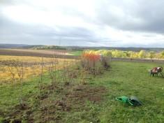 Fertigstellung der Heckenpflanzung (Teilstrecke)