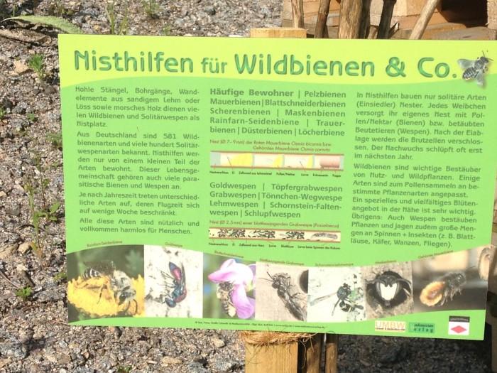 Infoschild Wildbienen