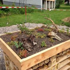 Frisch gepflanzter Dachgarten vom Wildbienenhaus