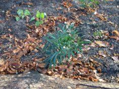 Zusätzliche Pflanzen