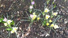 Die ersten Blumen unserer Herbstaktion.