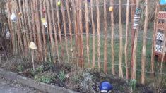 Ein Staketenzaun wurde letztes Wochenende aufgestellt und mit Wicken bepflanzt.