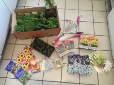 So alles ist bereit, Pflanzen, Todholz und Material für kleine feine Insektenhotels ist besorgt.