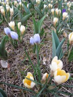 """Frühlingserwachen im """"Andersgarten"""""""