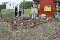 Zwei Mitwirkende Schülerinnen bestaunen die aus der Erde kommenden Frühlingsblumen