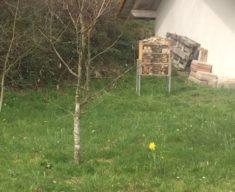 Und hier steht das fertige Bienenhotel, es kann eingezogen werden.
