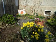 """Auch die Fläche an der Hauswand wurde im Herbst bienenfreundlich """"bestückt""""."""