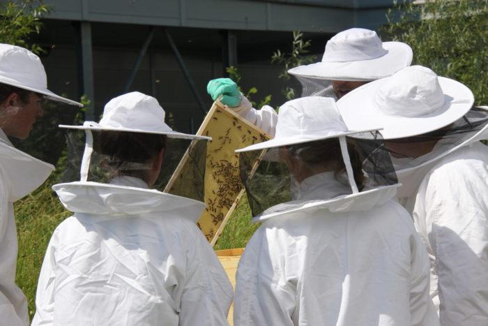 Ein Bienenstock will betreut werden