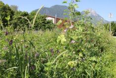 Entwicklung Blühwiese