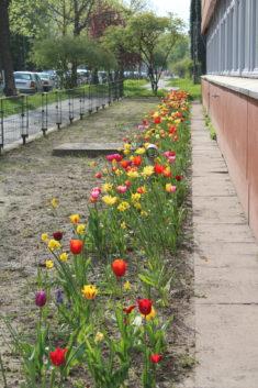 Achse der Blühfreude