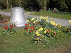 KonfirmandInnen schufen Blühinseln auf dem Friedhof