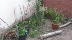 Noch ist etwas Platz….im begehbaren Garten