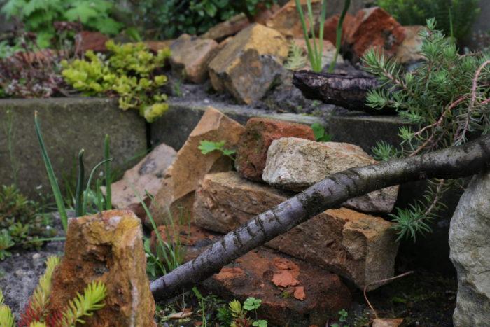 Wer wohl alles in den Ritzen zwischen diesen Steinen den Winter überdauert hat …?