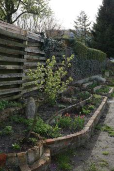 Unser kleiner Pflaumenbaum und die ersten blühenden Tulpen warten bei kaltem Osterwetter auf sum ...