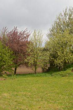 Es gibt auch schon ein paar schöne Obstbäume