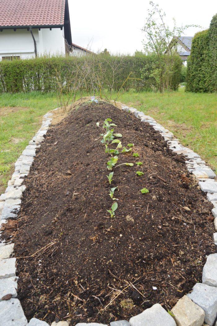 Unser fertiges Hügelbeet, bepflanzt und besät mit Gemüse… Vitamine für die Flüchtlinge