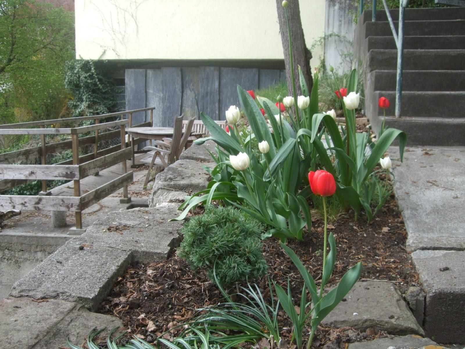 die krokusse sind bereits verbl ht derzeit bl hen die tulpen und bundeswettbewerb der. Black Bedroom Furniture Sets. Home Design Ideas