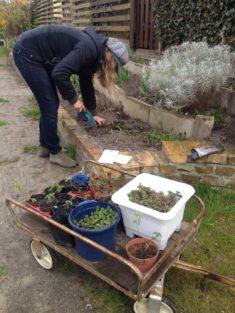Frühjahr 2017 Einheimische Wildblumen werden eingepflanzt und ausgesät