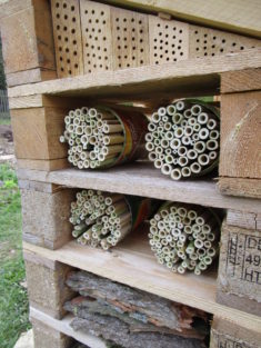 Wohnungsausbau: um ca. 250 Bambusröhrchen-Wohnungen für Wildbienen ist das Insektenhotel erweite ...