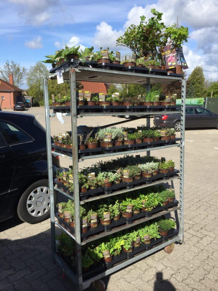 Große Pflanzenspende von der Firma LaBio – vielen Dank für die Unterstützung!