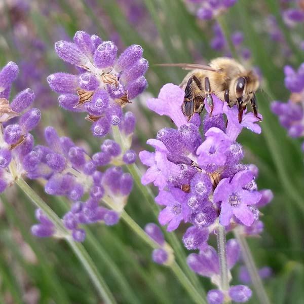 Unsere Honigbienen sind begeistert!