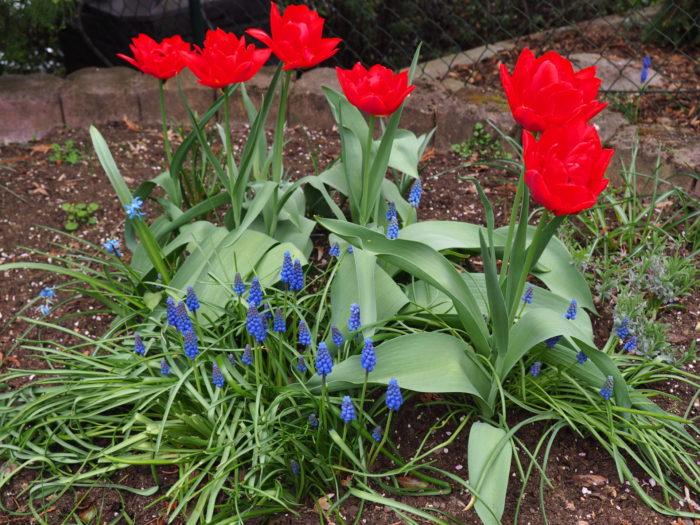 noch mehr Blumen sind gewachsen.