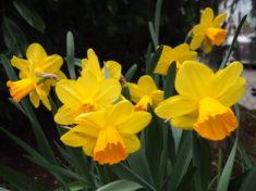 auch diese Blumen sind interessant für unsere Bienen.